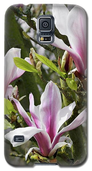 Saucer Magnolia Galaxy S5 Case - Magnolia X Soulangeana 'picture' by Jane Sugarman