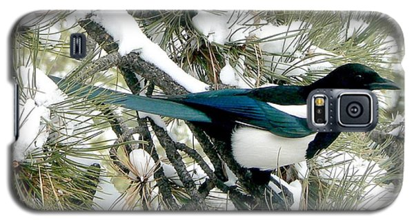 Magpie In The Snow Galaxy S5 Case by Marilyn Burton