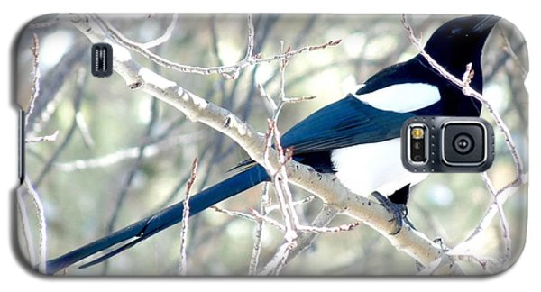 Magpie On Aspen Tree Galaxy S5 Case by Marilyn Burton