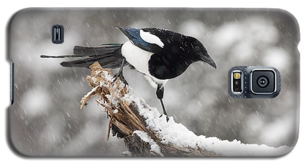 Magpie Out On A Branch Galaxy S5 Case by Tim Grams