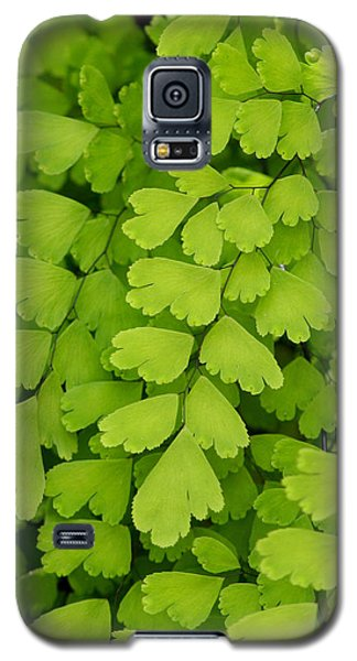 Maidenhair Fern Galaxy S5 Case by Art Block Collections