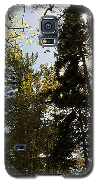 Maine Spring Wood Galaxy S5 Case by Daniel Hebard