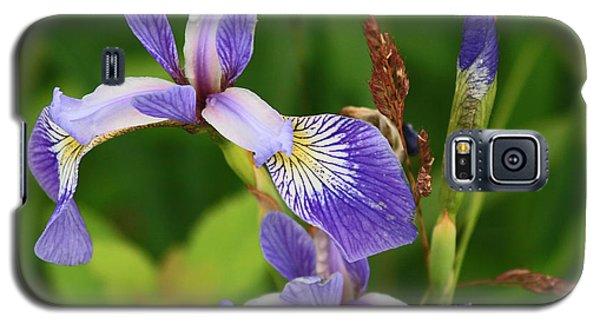 Maine Wild Iris Galaxy S5 Case