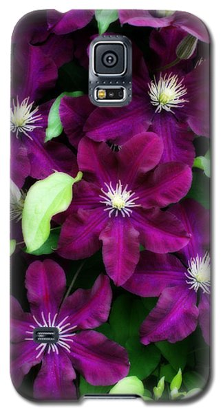 Majestic Amethyst Colored Clematis Galaxy S5 Case