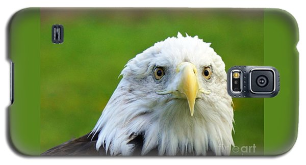Majestic Bald Eagle  Galaxy S5 Case