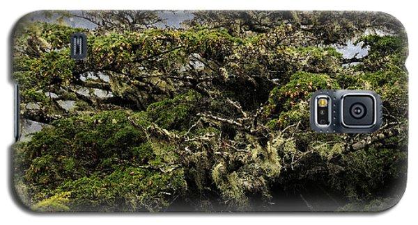 Majestic Branches Galaxy S5 Case by Davina Washington