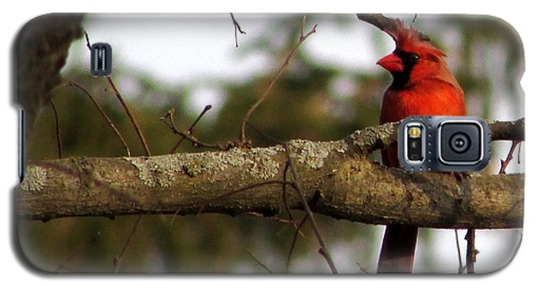 Majestic Cardinal Galaxy S5 Case