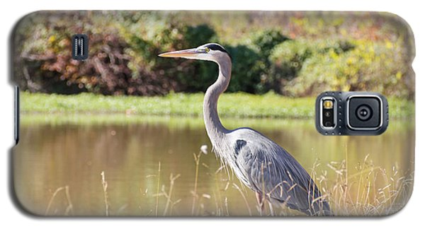 Majestic Great Blue Heron In Autumn Galaxy S5 Case