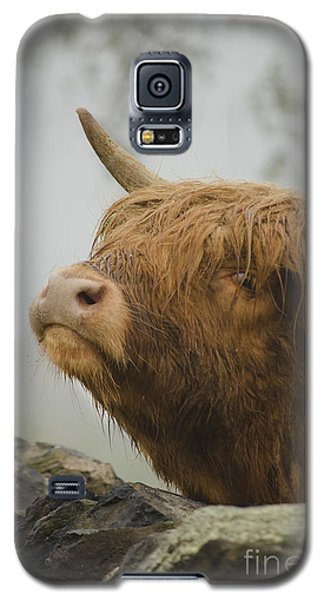 Majestic Highland Cow Galaxy S5 Case