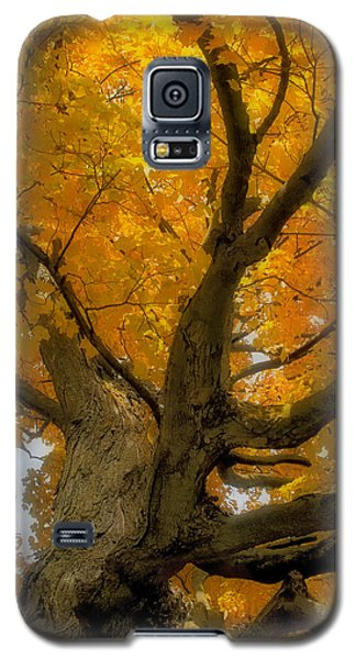 Galaxy S5 Case featuring the photograph Majestic Maple by Gary Hall