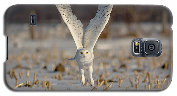 Majestic Snowy Galaxy S5 Case