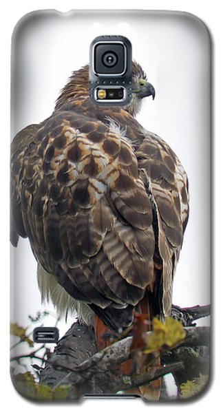 Galaxy S5 Case featuring the photograph Majestic  by Timothy McIntyre