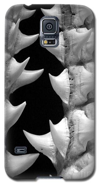 Galaxy S5 Case featuring the photograph Mako Shark Teeth by Robert Riordan