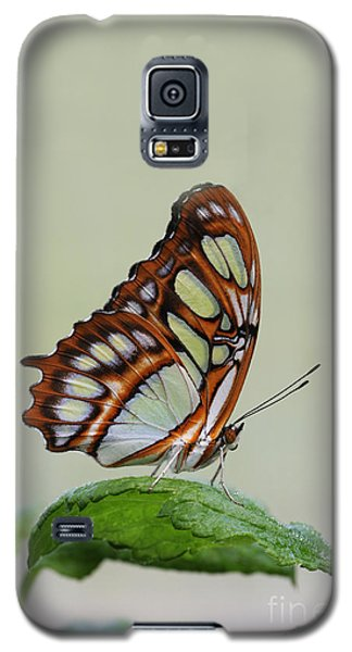 Galaxy S5 Case featuring the photograph Malachite Butterfly #5 by Judy Whitton