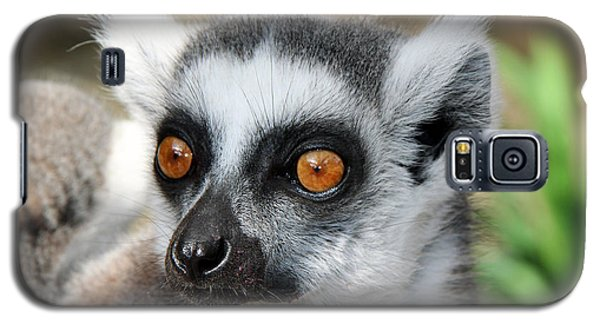 Galaxy S5 Case featuring the photograph Malagasy Lemur by Sergey Lukashin