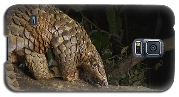 Malayan Pangolin Eating Ants Vietnam Galaxy S5 Case by Suzi Eszterhas