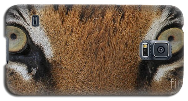 Malayan Tiger Eyes Galaxy S5 Case