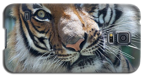 Malayan Tiger Galaxy S5 Case
