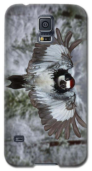 Galaxy S5 Case featuring the photograph Male Acorn Woodpecker - Phone Case Design by Gregory Scott