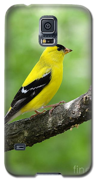 Male American Goldfinch Galaxy S5 Case