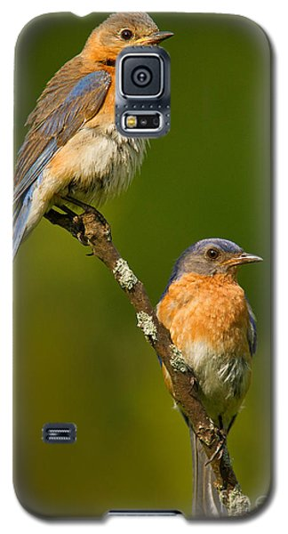 Galaxy S5 Case featuring the photograph Male And Female Bluebirds by Jerry Fornarotto