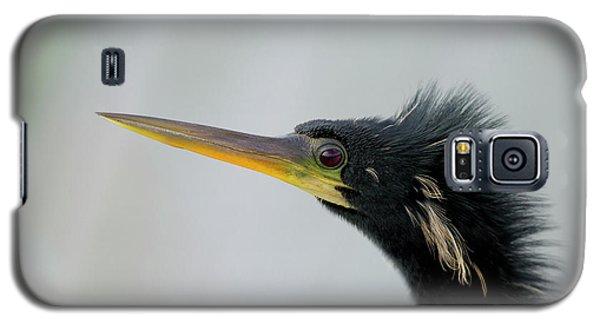 Male Anhinga, Anhinga Anhinga, Viera Galaxy S5 Case