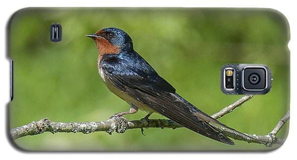 Male Barn Swallow Hirundo Rustica Dsb262 Galaxy S5 Case