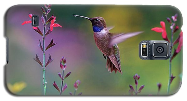 Male Black-chinned Hummingbird Galaxy S5 Case