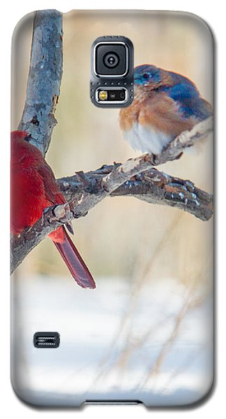 Male Bluebird And Cardinal On Branch Galaxy S5 Case