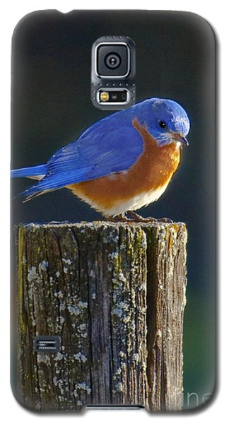 Male Bluebird Galaxy S5 Case