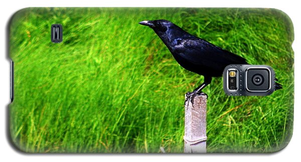 Galaxy S5 Case featuring the photograph Male Boat-tailed Grackle by Mary Beth Landis