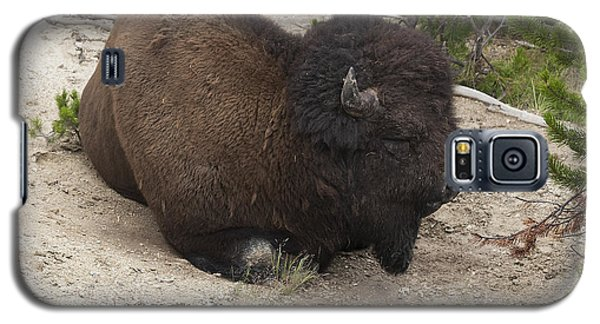 Male Buffalo At Hot Springs Galaxy S5 Case by Belinda Greb
