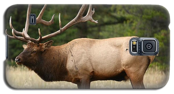 Male Bull Elk At Yellowstone National Park Galaxy S5 Case by Jetson Nguyen