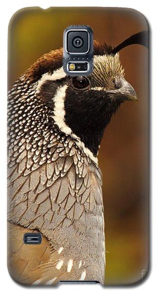 Galaxy S5 Case featuring the photograph Male California Quail by Max Allen