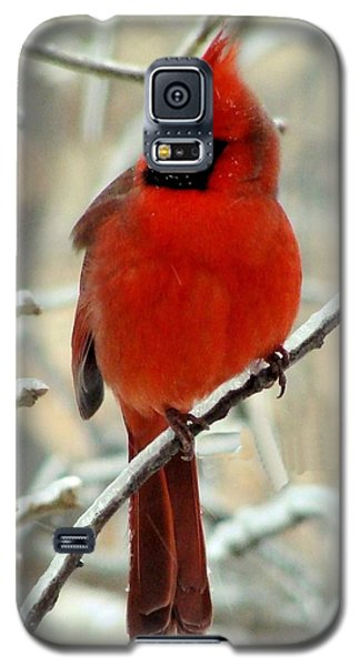 Galaxy S5 Case featuring the photograph Male Cardinal  by Janette Boyd