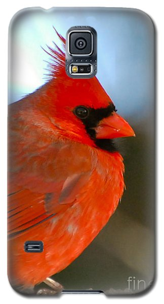 Galaxy S5 Case featuring the photograph Male Cardinal  by Kerri Farley