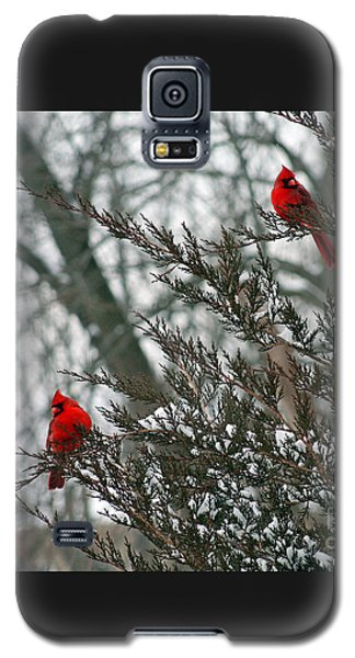 Male Cardinal Pair Galaxy S5 Case