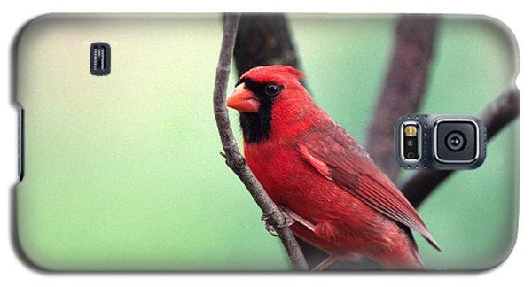 Male Cardinal Galaxy S5 Case by Thomas R Fletcher
