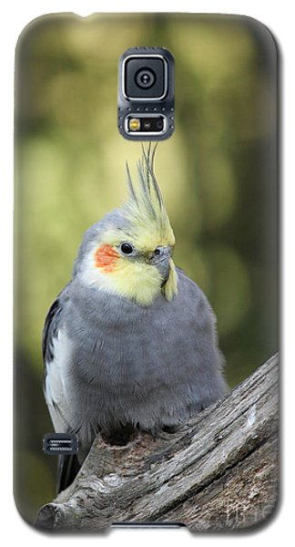Galaxy S5 Case featuring the photograph Male Cockatiel by Judy Whitton