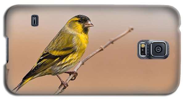 Galaxy S5 Case featuring the photograph Male Eurasian Siskin by Liz Leyden