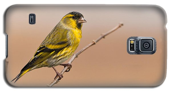 Male Eurasian Siskin Galaxy S5 Case