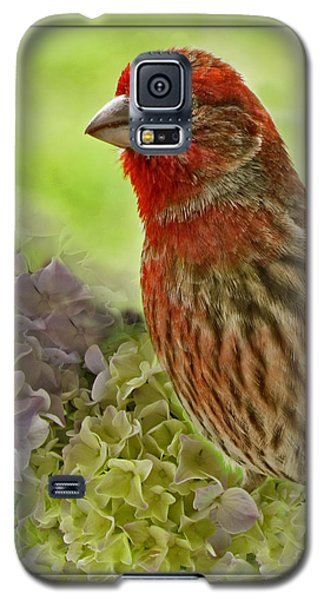 Galaxy S5 Case featuring the photograph Male Finch In Hydrangesa by Debbie Portwood