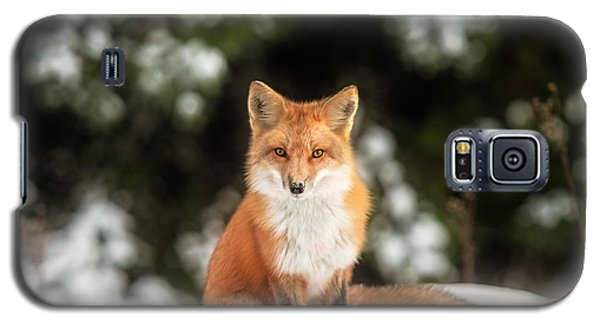 Male Fox Galaxy S5 Case by Robert Clifford