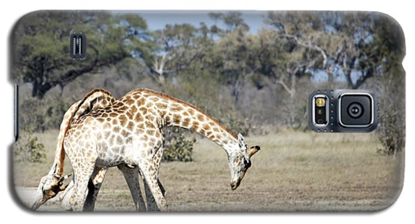 Galaxy S5 Case featuring the photograph Male Giraffes Necking by Liz Leyden
