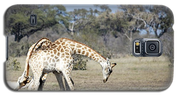 Male Giraffes Necking Galaxy S5 Case