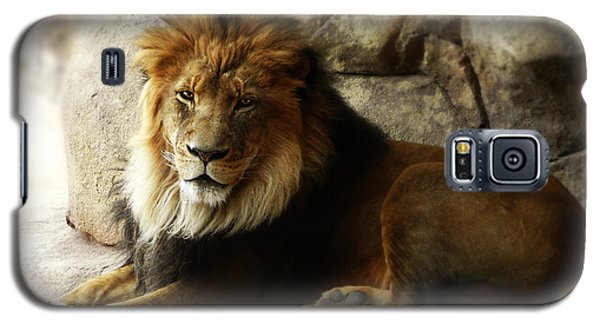Male Lion At Rest Galaxy S5 Case