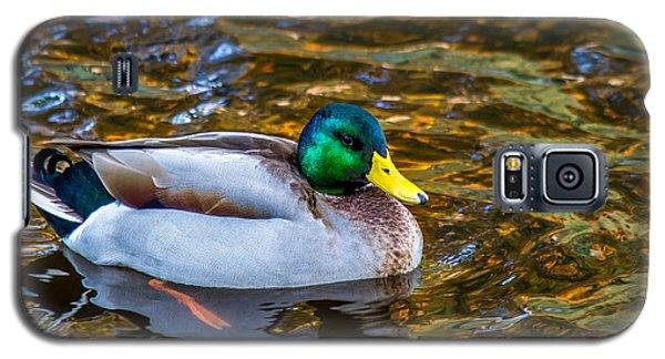Male Mallard Duck In Pond Galaxy S5 Case