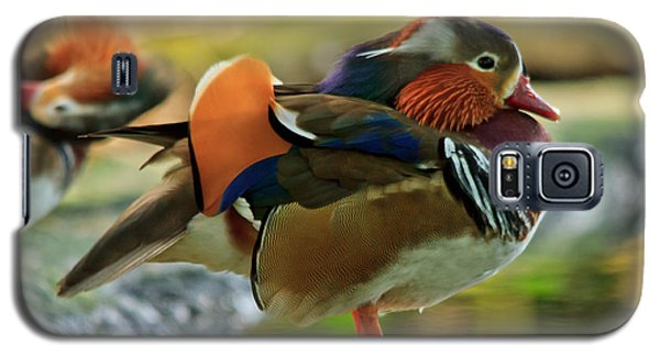 Galaxy S5 Case featuring the photograph Male Mandarin Duck On A Rock by Eti Reid