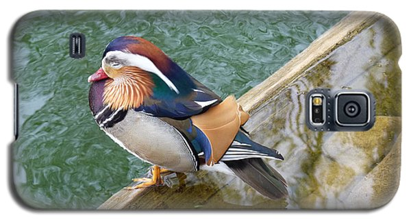 Male Mandarin Duck Sleeping At Pond Edge Galaxy S5 Case