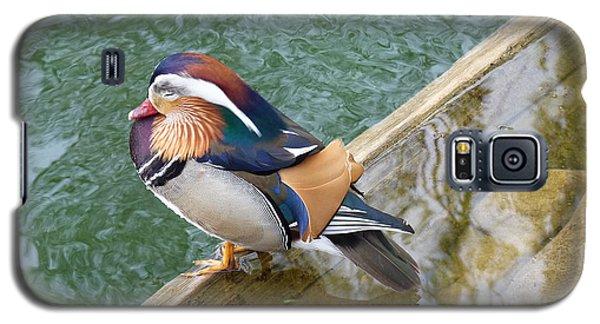 Galaxy S5 Case featuring the photograph Male Mandarin Duck Sleeping At Pond Edge by Menega Sabidussi
